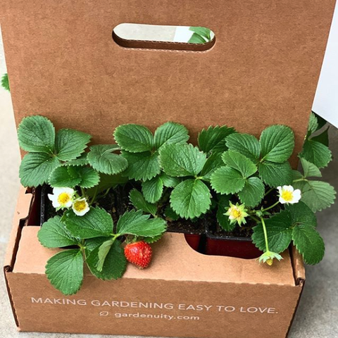 gardenuity custom gardening kits
