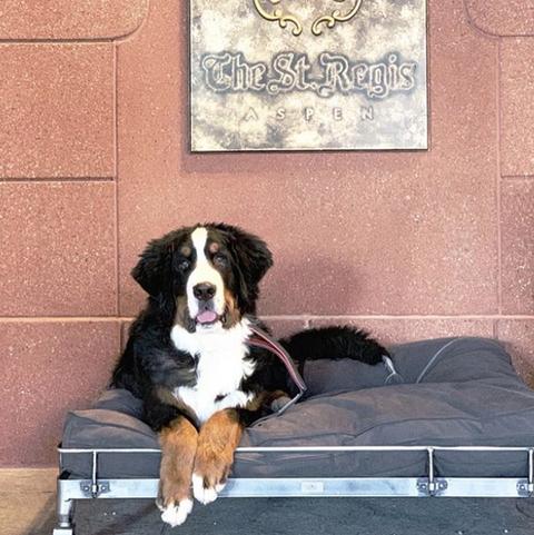 Dog, Canidae, Mammal, Bernese mountain dog, Dog breed, Carnivore, Entlebucher mountain dog, Working dog, Greater swiss mountain dog, Companion dog,