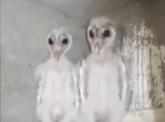 The Internet Thinks These Things Are Aliens. The Truth Is Much More Sinister.