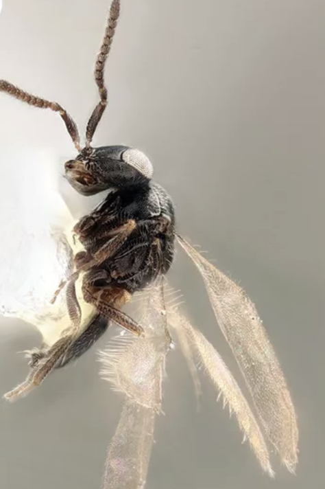 Insect, Macro photography, Pest, Invertebrate, Organism, Tachinidae, Fly, Close-up, house fly, Photography,