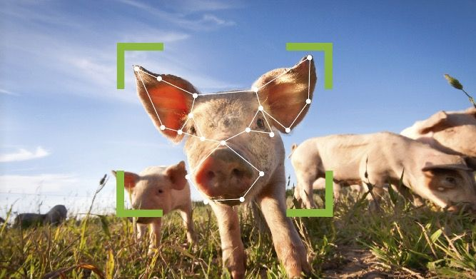 From cow loos to dog fitbits: 20 ways technology will transform the countryside in 2020