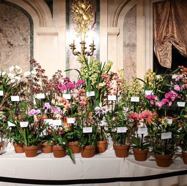 One-of-a-kind orchids on display for the annual orchid sale.