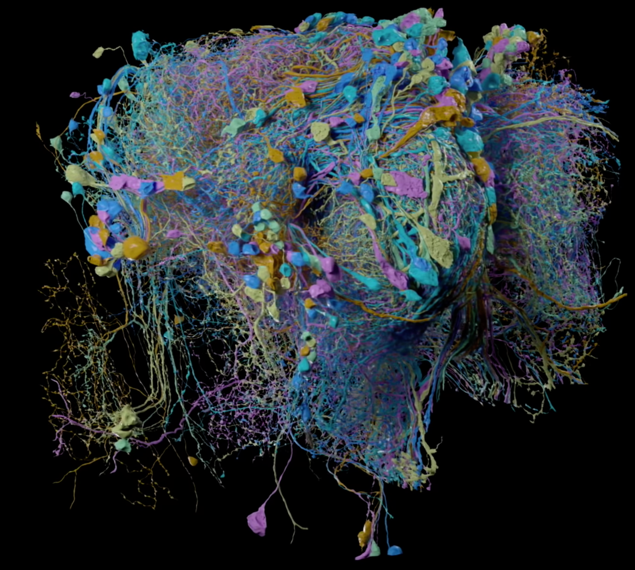 Google's 3D Map of a Fly Brain Is Beautiful
