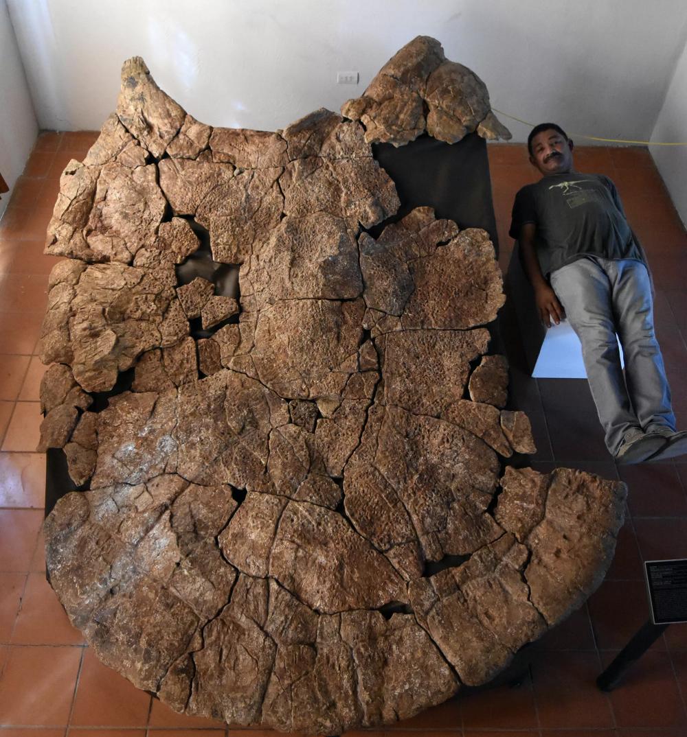 This Prehistoric Mega Turtle Was a Big Boy