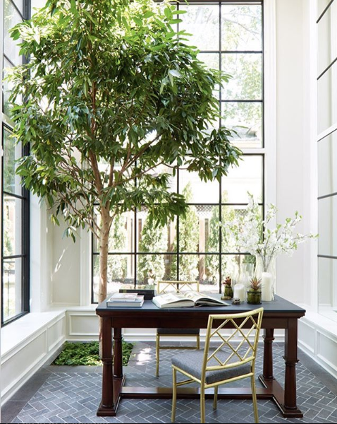 Here S What You Need To Know About Growing A Tree Out Of The Floor Of Your Home Indoor Trees