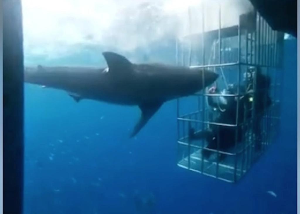 Il video terrificante di uno squalo bianco che cerca di entrare nella gabbia con due turisti