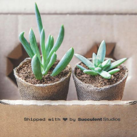 Flowerpot, Flower, Houseplant, Plant, Leaf, Terrestrial plant, Cactus, Succulent plant, Plant stem, Flowering plant,
