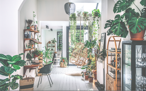 wild interiors beautiful plants for beautiful spaces
