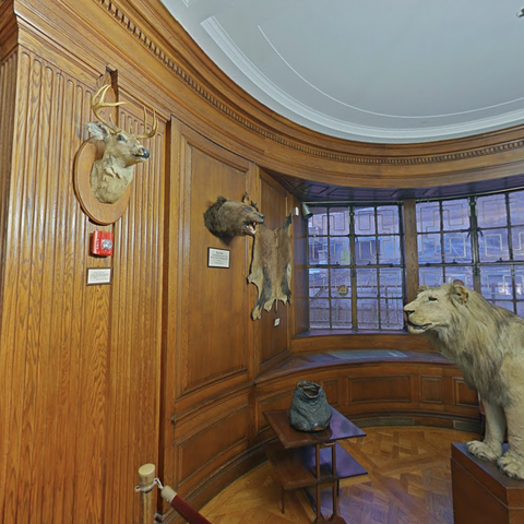 round room with taxidermied lion