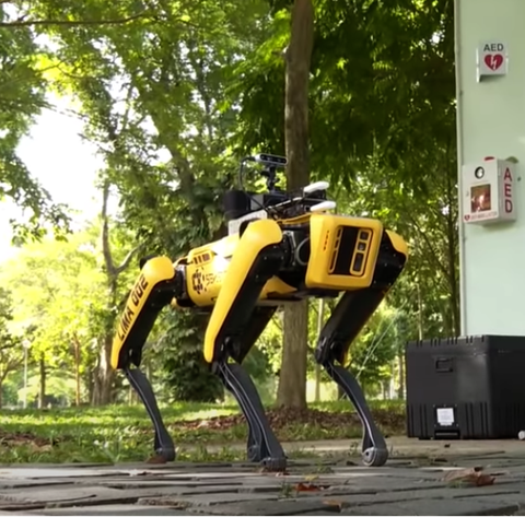 spot, the robotic dog, walking through a park in singapore