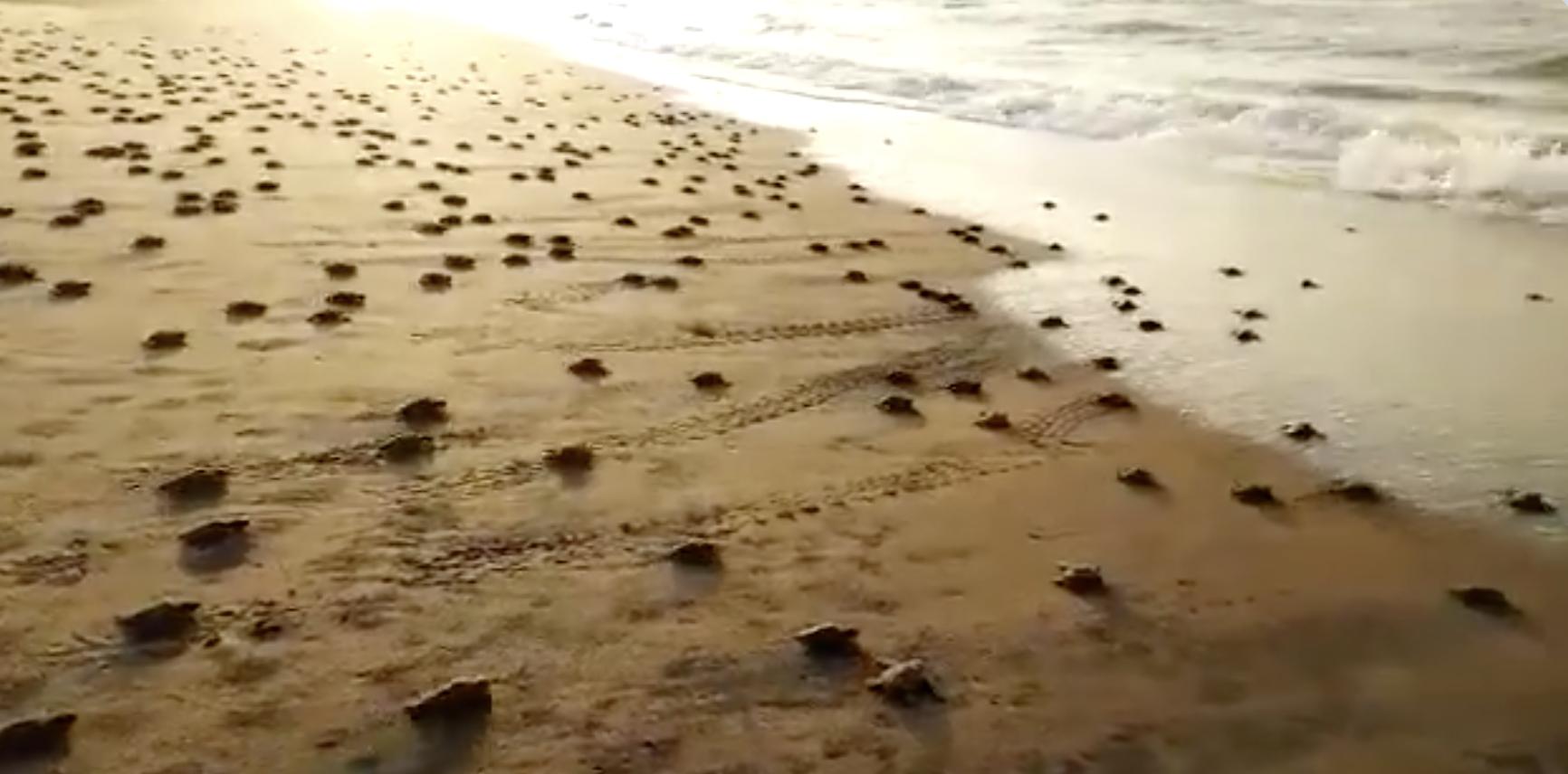 beach sex free in manpo