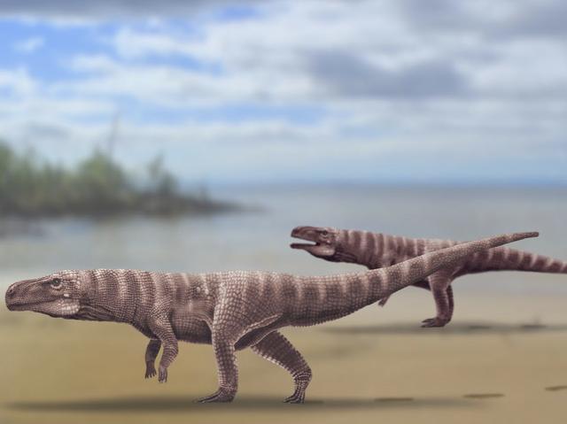 a rendering of prehistoric crocodylomorphs walking on two hind legs