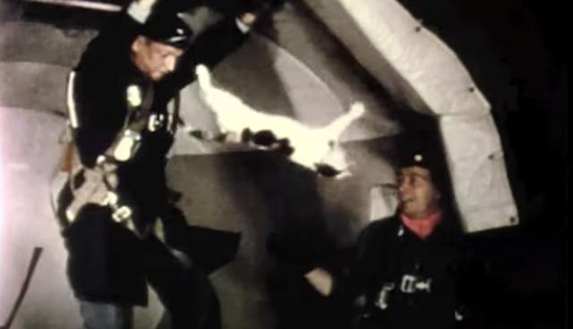 cats floating in zero gravity