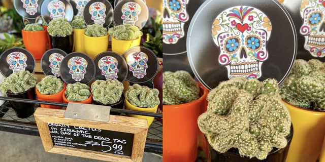 trader joes sugar skull brain cactus