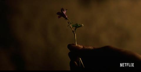 全智賢主演《屍戰朝鮮:雅信傳》預告釋出!兒時雅信「現身」揭開生死草傳說的秘密
