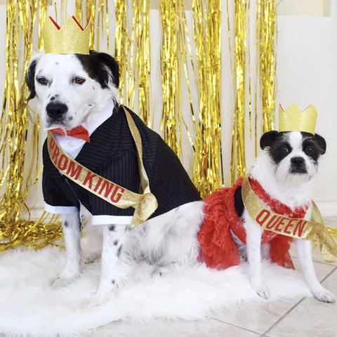 dogs dressed as prom king and queen