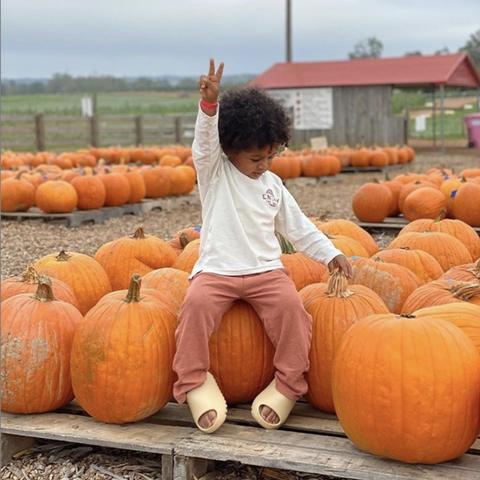 best pumpkin farms