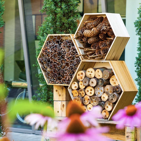 how to build a bug hotel with the kids