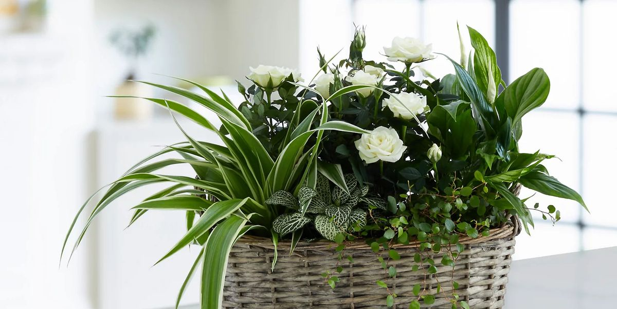 21 plant gifts for friends and family