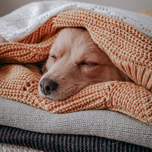 weightted blankets
