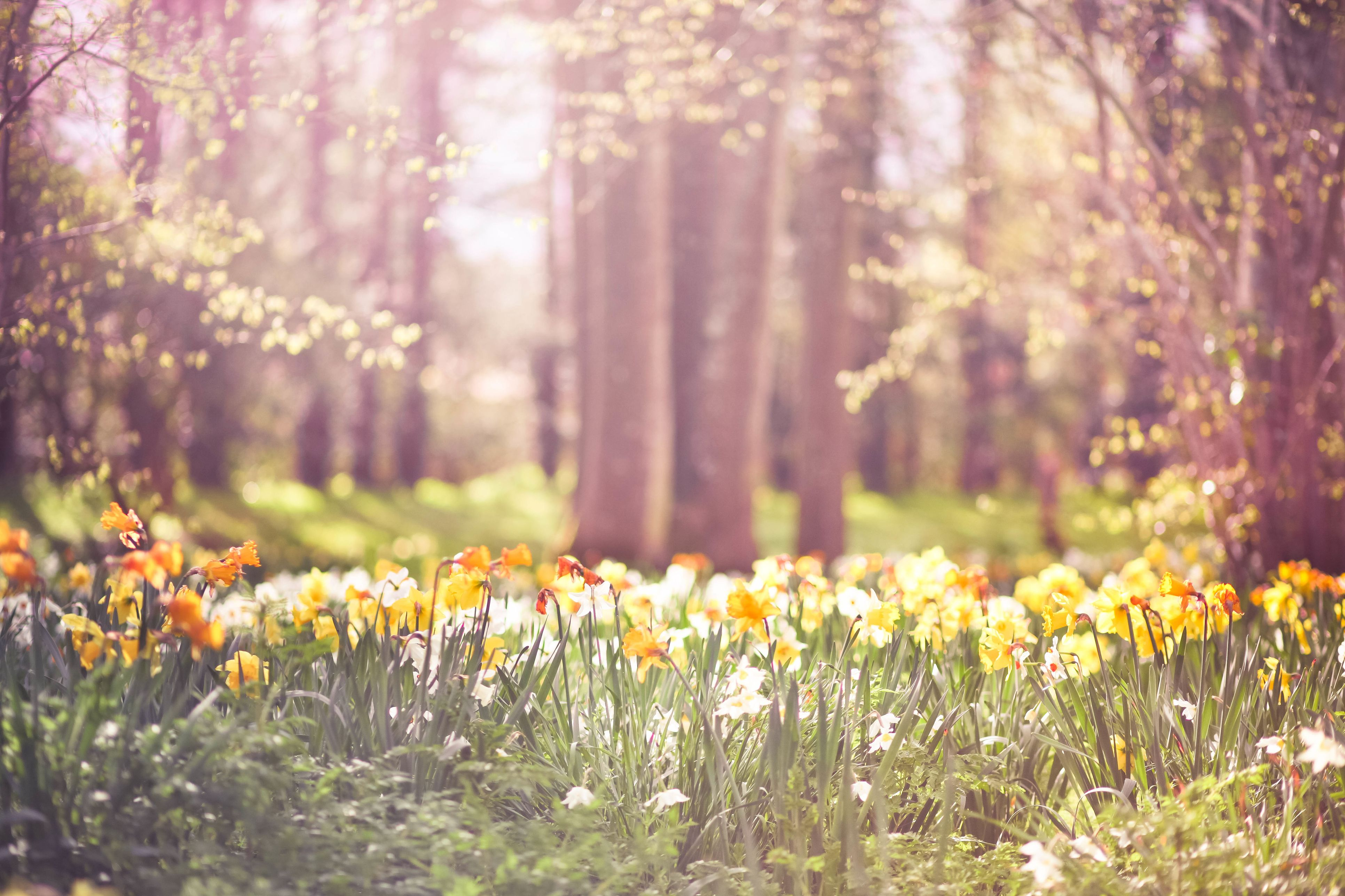 Spring is off to a good start as the Met Office says it's set to warm up this week