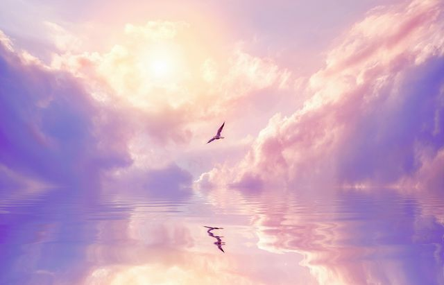 seagull and violet clouds