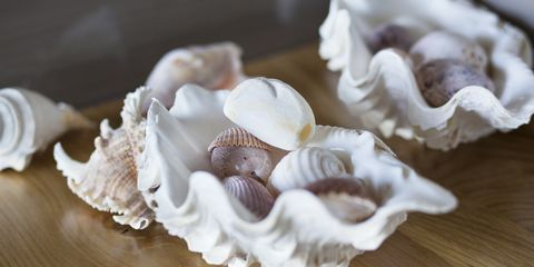 close up of conch shells on a table at home