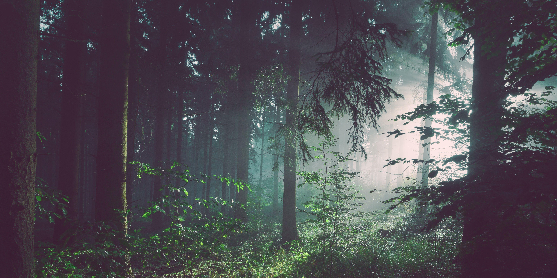 bossen-vermissing