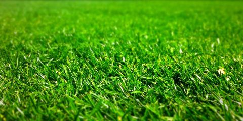 When To Fertilize Lawn Gr Fertilizer Tips