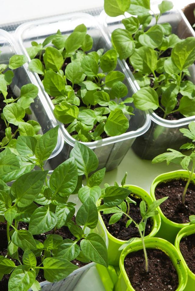 10 Ideas For Growing Vegetables Indoors