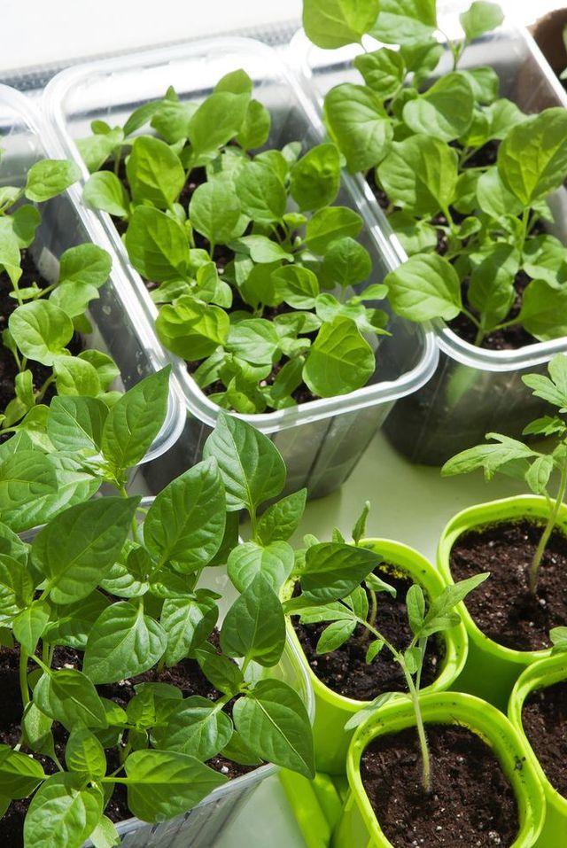 10 Ideas For Growing Vegetables Indoors Indoor Vegetable Garden Ideas