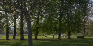 London park in summer with barbecue in the distance