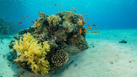 seizoenen-onder-water