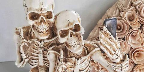 Skeleton, Bone, Skull, Anthropology, Jaw, Human, Stock photography, Illustration, Art,