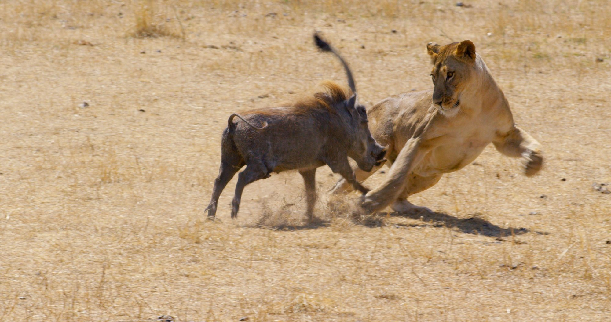 Viewers have a big problem with BBC One's new nature documentary Serengeti