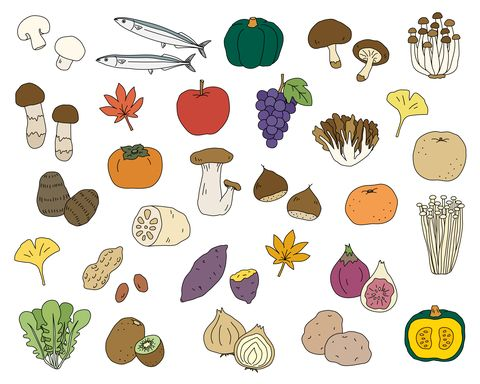 set of hand drawn illustrations of autumn foods