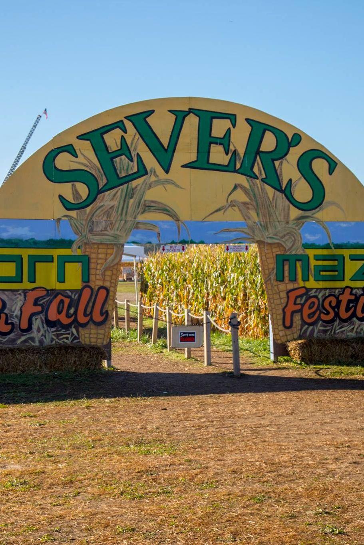 sever's corn maze shakopee minnesota