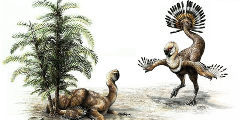 Dinosaur, Extinction, Terrestrial animal, Velociraptor, Organism, Adaptation, Troodon, Pachycephalosaurus, Wildlife, Tyrannosaurus,