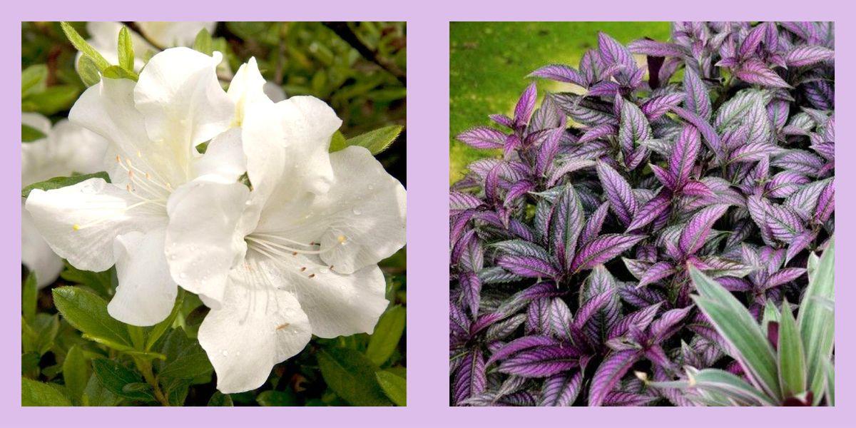 10 Best Shade Perennials Perennial Flowers For Shade