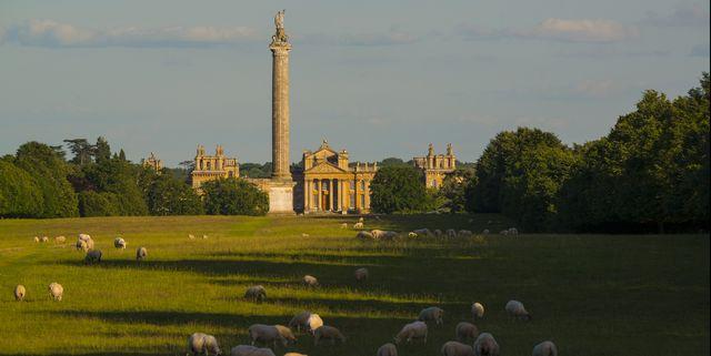 blenheim estate is looking for a shepherd
