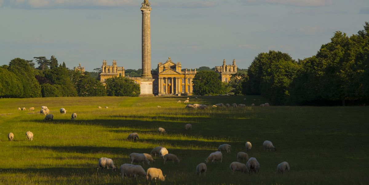 Dream job alert! Blenheim Estate is looking for a new shepherd