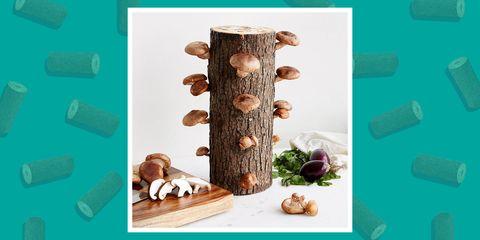 shitake mushroom log