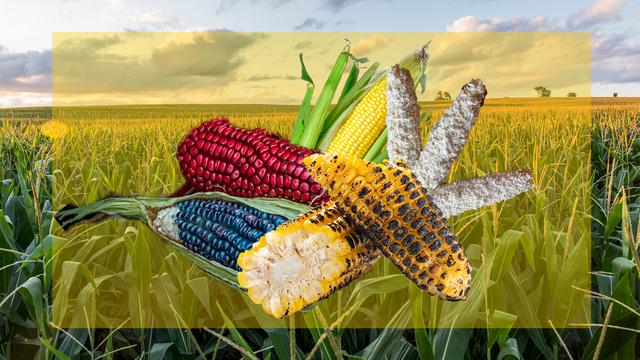 5 ways to make corn on the cob