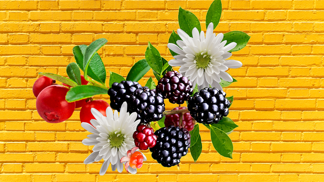 five unexpected summer berries to brighten your dishes