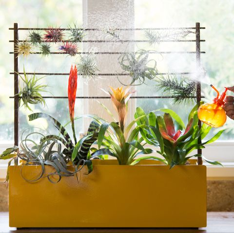 Plant Positivity: 8 Ways to Enrich Your Home With Plants