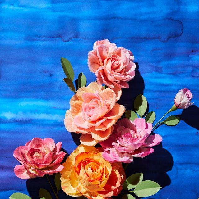 Garden roses, Flower, Rose, Blue, Pink, Floribunda, Rose family, Still life, Rosa × centifolia, Watercolor paint,