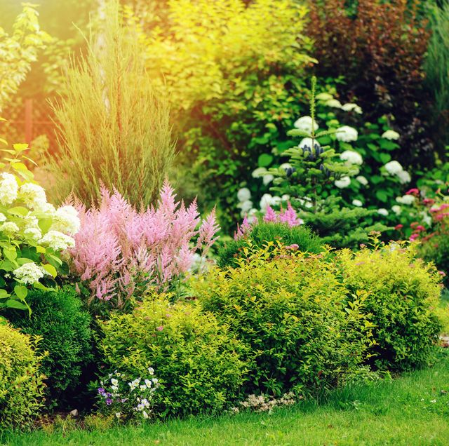 mixed border in summer garden with yellow spirea japonica, pink astilbe, hydrangea planting together shrubs and flowers