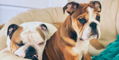 Woman shares genius trick to prepare a dog for the arrival of another pet