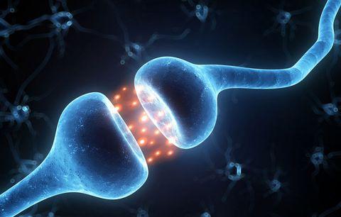 hormone receptors