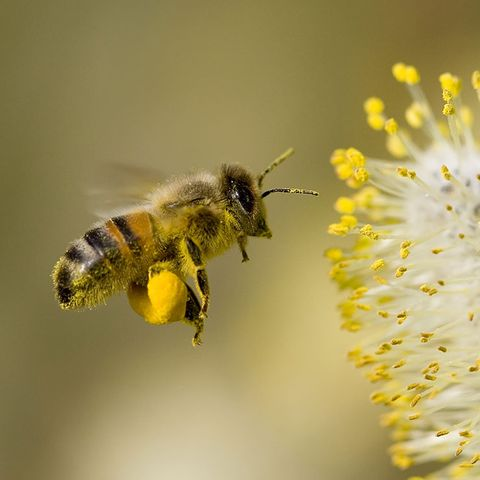 honey from america